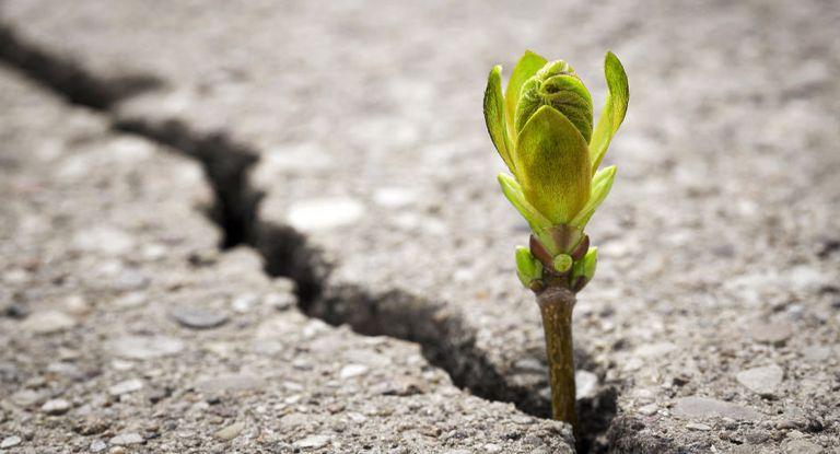 Zarte Pflänzchen: Treasurer sind an grünen Finanzierungen interessiert, aber es gibt auch Skeptiker.
