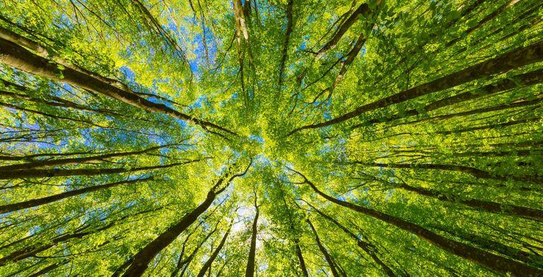Der Green-Finance-Markt wächst unaufhaltsam.